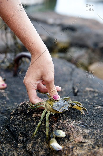 a child holds a crab he caught in a maine tidepool