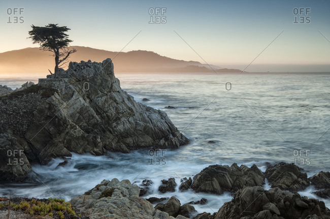 Lone Cypress At Pebble Beach On The California Coast