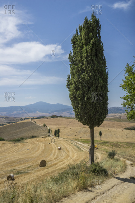 Italy, Tuscany, Pienza . walking along the trail from Pienza to Bagnovignoni
