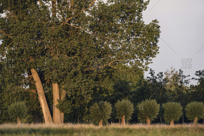 Trees at sunset in a rural area