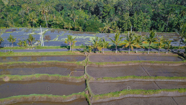 Aerial View of rice fields on a bright sunny day in Ubud, Bali, Indonesia.