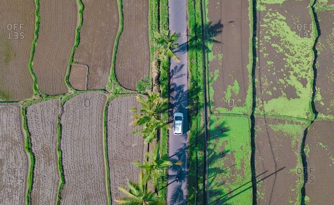 Aerial view of a car down the road on a sunny day through the terrace plantations in ubud, bali, Indonesia.
