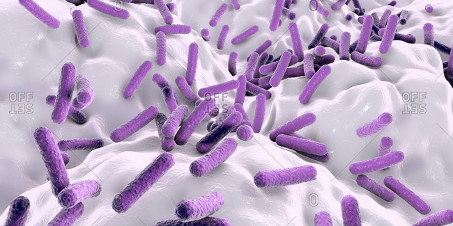 Faecalibacterium prausnitzii bacteria, illustration. This is one of the most abundant bacterial species found in the human gut. Its presence is thought to give protection against a number of gut disorders including inflammatory bowel disease, Crohn's disease and colon cancer.