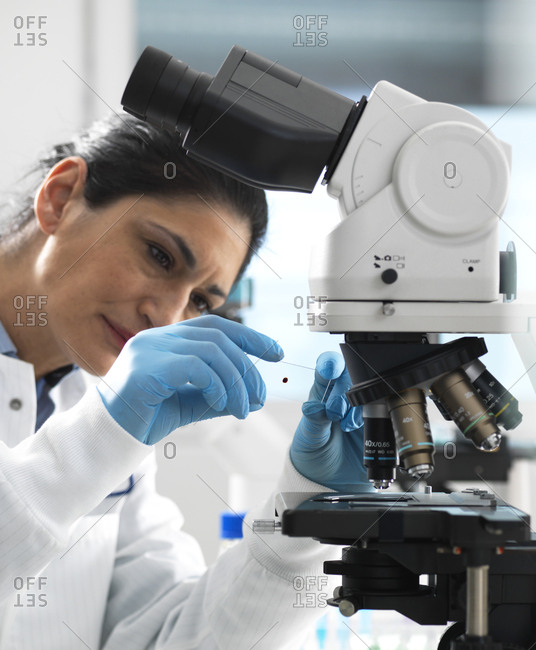 Lab technician examing a glass slide containing a blood sample ready to be magnified under the microscope in the laboratory