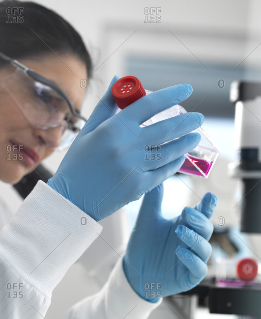 cell research- Female cell biologist examining a flask containing stem cells- cultivated in red growth medium in the laboratory