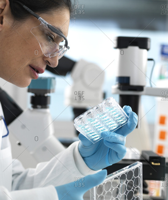 Biotech Research- Scientist viewing samples in multi well plate ready for analysis during a experiment in the laboratory