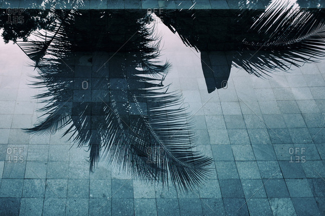 Palm tree reflecting in water surface of a swimming pool- Bali- Indonesia