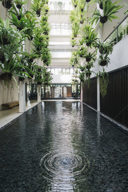 Indoor garden with hanging plants- Bali- Indonesia