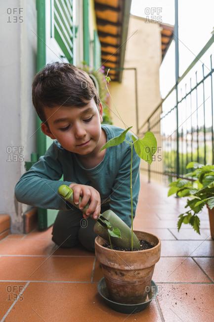 Portrait of little boy gardening on balcony