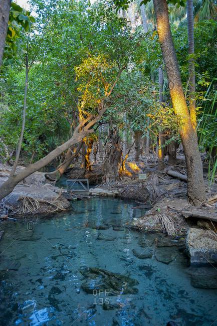 Mataranka thermal pool in the outback of the Northern Territory- Australia