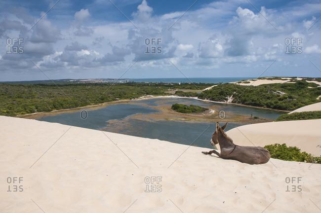 Donkey lying on famous sand dunes of Natal- Rio Grande do Norte