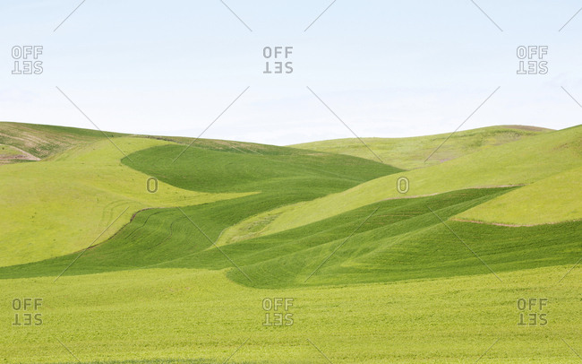 Rolling hills of green grass in the Palouse region, Washington State, USA