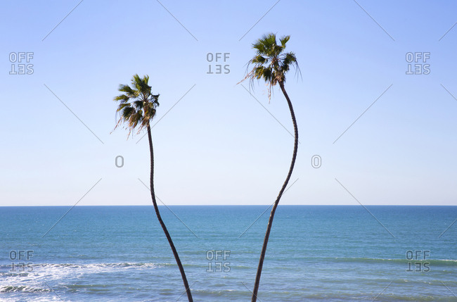 Two twisted palm trees at Santa Monica beach, Los Angeles, California