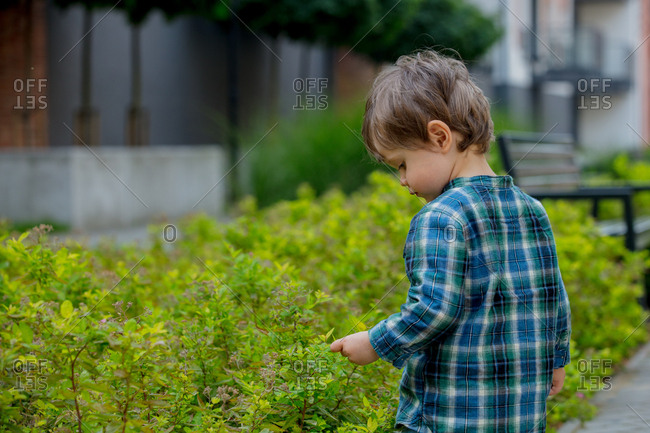 Little boy touching green bush