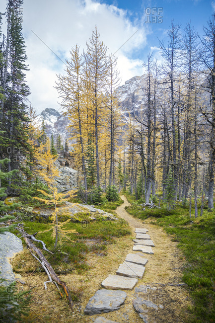Part of Alpine Circuit trail in Yoho National Park