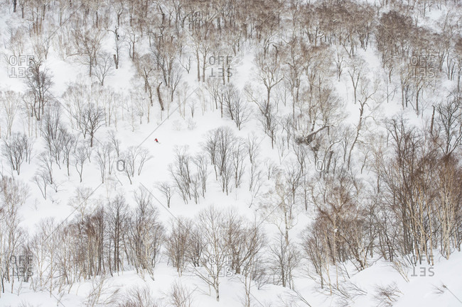 Distant View Of A Snowboarder Riding Down Mountain Through Trees In Niseko, Japan