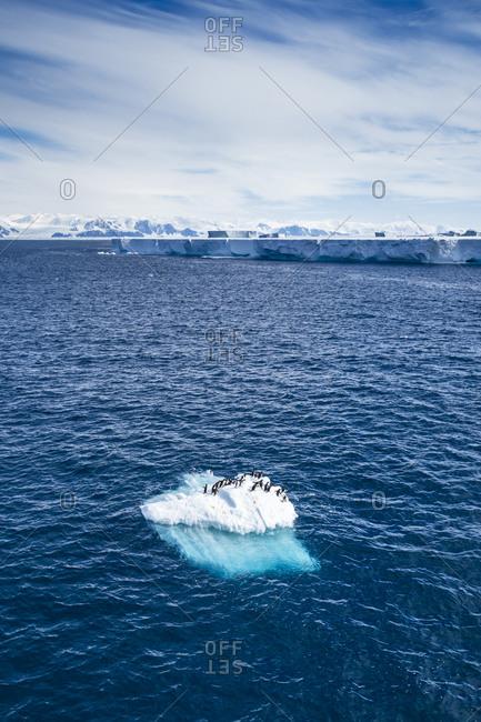 Group of penguins standing on iceberg