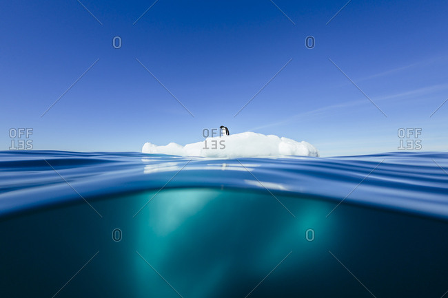 Lone penguin standing on ice floe