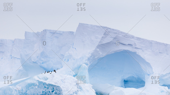 Group of penguins standing on ice in East Antarctica
