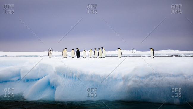 Group of penguins standing on iceberg in Antarctica