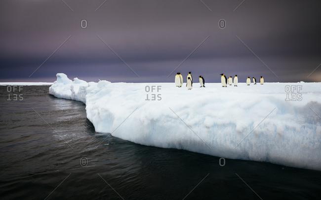 Emperor Penguins standing on iceberg