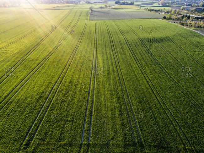 Aerial view of green field with graphic lines at sunset, Genolier, Switzerland
