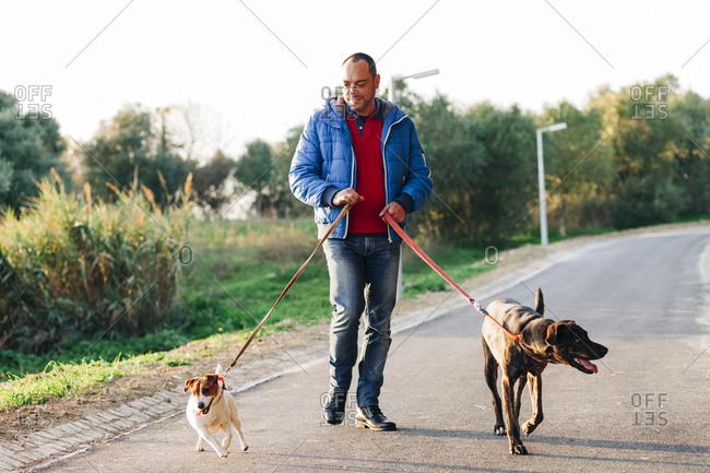 Man walking two dogs in park in warm light