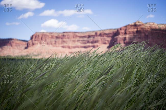 Green grass in front of red rock cliffs, Kannaraville, Utah, USA