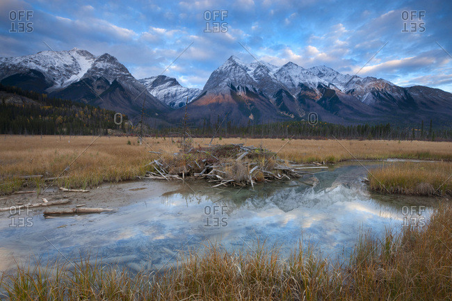 Scenery with beaver dam and Mount Vaux, Chancellor Peak and Ottertail Range in Yoho National Park
