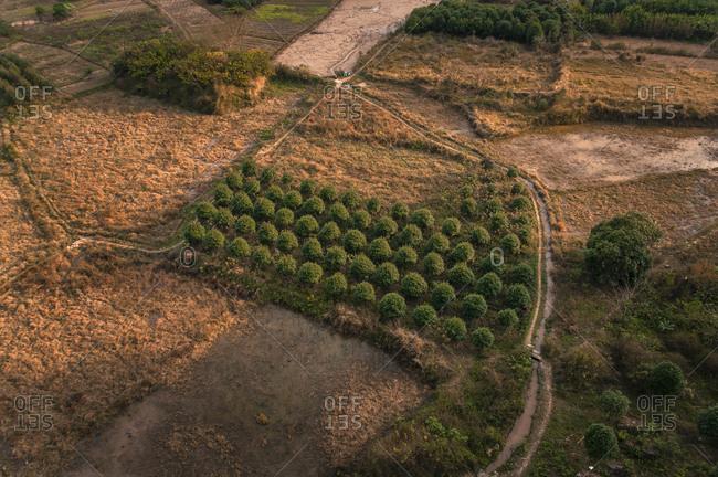 Rows of trees, Yangshuo, Guangxi Province, China