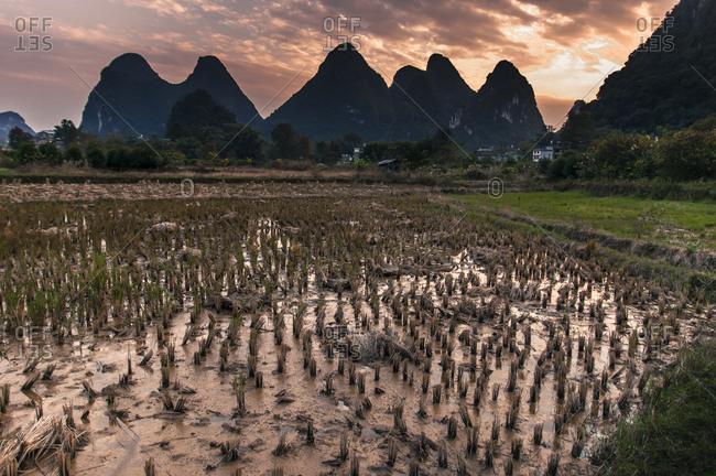 Rice paddy and mountains at sunset, Yangshuo, Guangxi Province, China