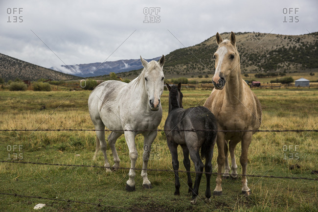 Three horses stand together in Idaho
