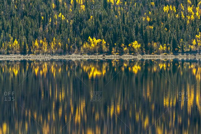 Forest reflecting in lake in autumn