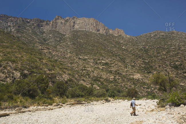 GUADALUPE MOUNTAINS NATIONAL PARK, TEXAS, USA. An older gentleman wearing a wide-brim hat walks across a dry sandy wash in a desert mountain scene.