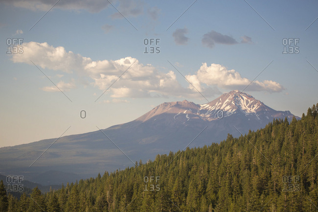 Forest and mountain peak, Shasta, California, USA
