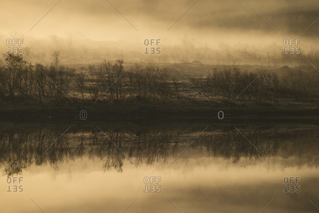 Scenery with lake and trees on shore with fog at sunrise