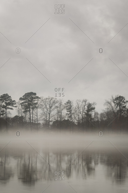 Lakeside tress shrouded in fog in North Carolina.