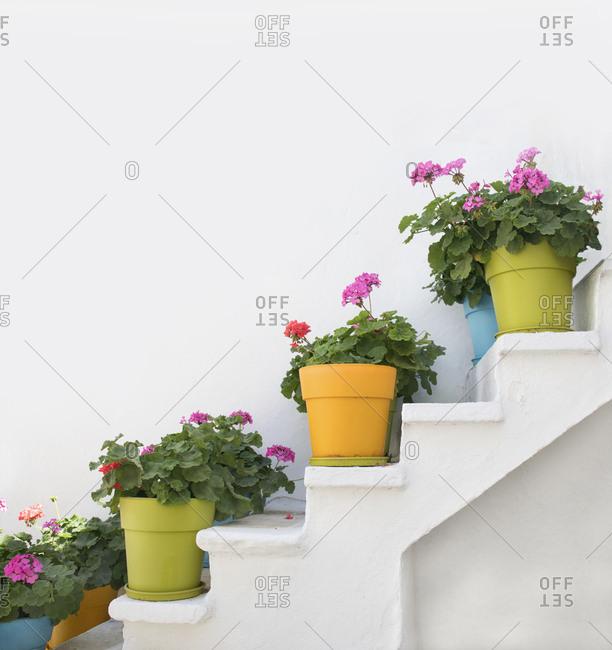 Flower pots on white steps, Naxos Island, Cyclades, Greece
