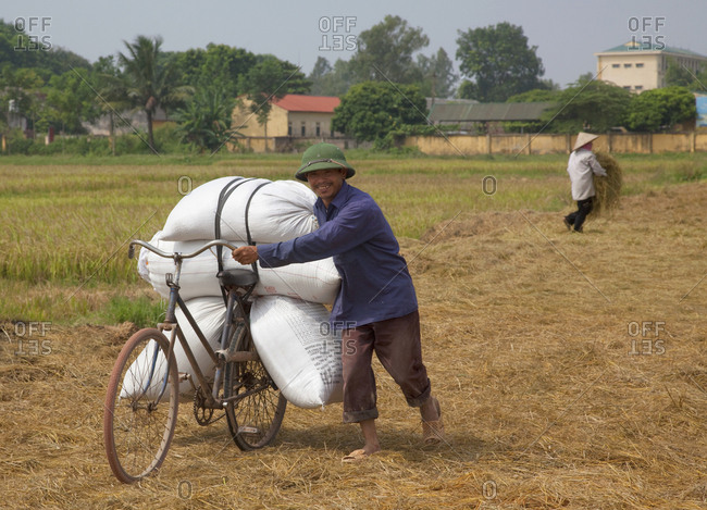 Hanoi, Vietnam - October 1, 2009: Man bringing in rice harvest on his old bicycle just outside of town