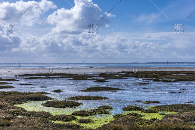 France, Arcachon Bay, Andernos-les-Bains, Saint-Brice-les Quinconces natural site (Saint James way), coastal path, seagrasses at low tide