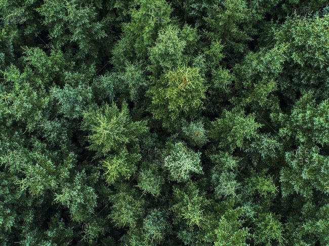 Norway, Lofoten Islands, trees