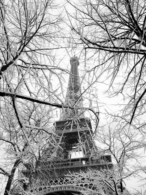 Snow covered   trees and Eiffel tower, 16eme arrondissement, Paris, France