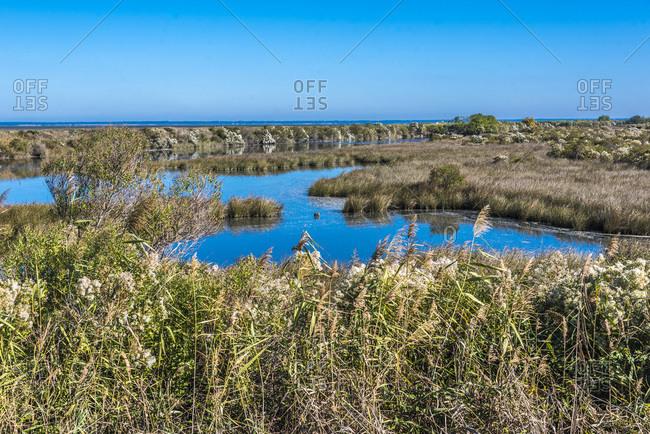 France, New Aquitaine, Arcachon Bay, La Teste de Buch, Bordes salt marsh