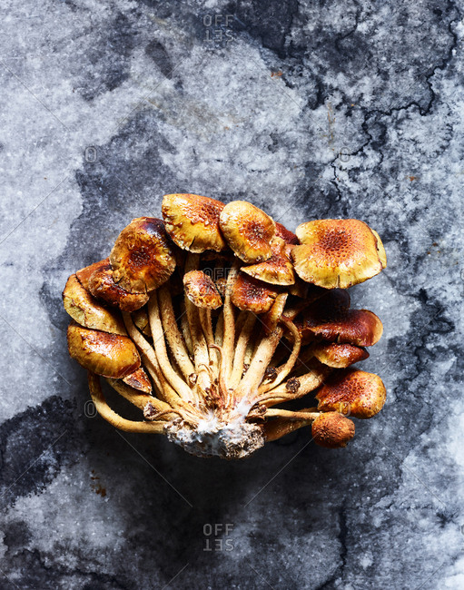 Chestnut mushrooms from the Offset Collection