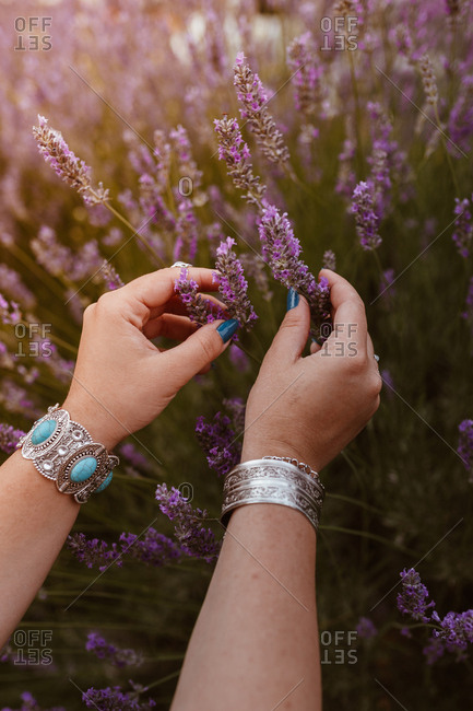 From above crop hands decorated with bracelets touching charming lavender in sunset evening