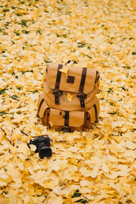 From above orange leather backpack and professional digital camera on golden leaves in autumn