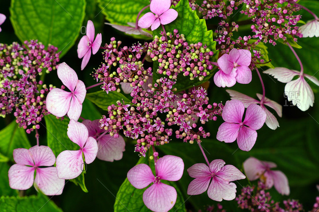 Purple flowers on bush