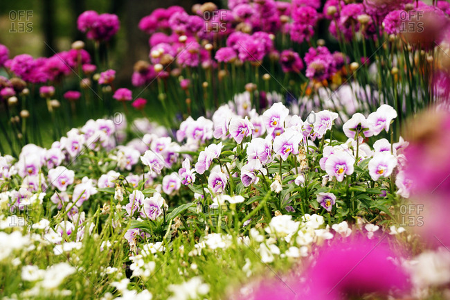 Flowerbed with various flowers in park