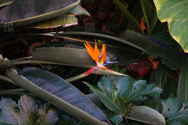 Flowerbed with bird of paradise flowers