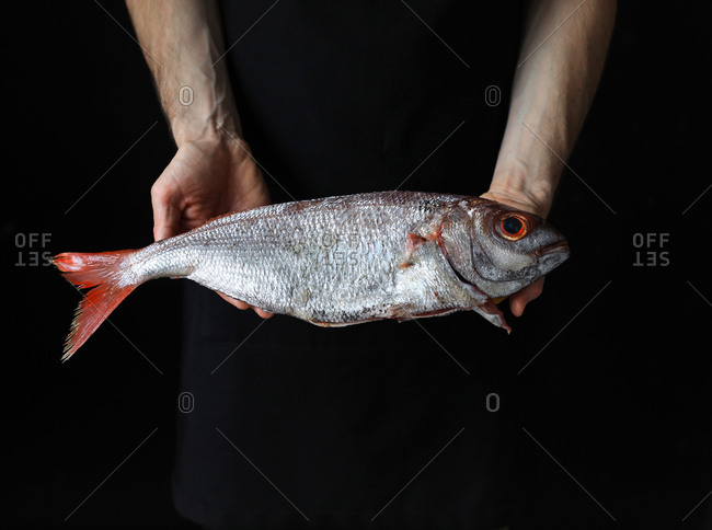 Big fresh scale fish with red eye and tail in hands